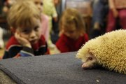Preschooler Carter Herron watches an albino hedgehog at Prairie Park Nature Center, 2730 SW Harper St. The community mobilized around the center in February when city officials considered closing it to balance their budget.