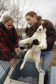 Liz Smith, left, of the Lawrence Humane Society and Carmen Simon of the Kansas Animal Health Department transfer one of several dogs into a crate on Friday at the humane society.