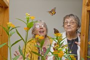 Judy Carpenter, Left, and Frances Vogel watch monarch butterflies at close range at the Monarch Watch Spring Open House on Kansas University's West Campus. Monarch Watch needs about $40,000 this year to continue its operations.