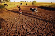 Farmer Nelci de Fatima Goncalves pulls a cow across a cracked field caused by a drought May 9 in Passo Fundo, Rio Grande do Sul, Brazil. Southern Brazilian states far from the Amazon have suffered from an extended drought, caused by La Nina, a periodic cooling of waters in the Pacific Ocean, while across the Amazon basin, river dwellers are trying to stay above rising floodwaters that have killed 44 people and left 376,000 homeless.