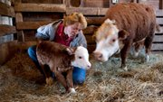 Rancher Ali Petersen, of Tekamah, Neb., helps a mini-Hereford calf take its first step eight hours after it was born.