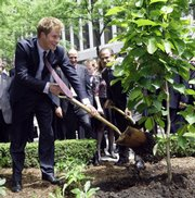 Britain's Prince Harry throws a shovel of dirt at the base of a magnolia bush planted in The British Garden on Friday at Hanover Square in New York.