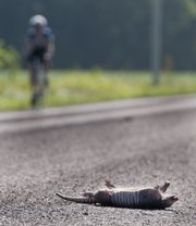 A cyclist passes by a dead armadillo in the middle of County Road 458, just west of U.S. Highway 59, Tuesday. Armadillos are not common to this part of Kansas.