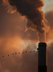 A flock of geese fly past a smokestack in this Jan. 10 file photo at the Jeffery Energy Center coal power plant near Emmitt, Kan. Sweeping legislation to curb the pollution linked to global warming and create a new energy-efficient economy is headed to an uncertain future in the Senate after squeaking through the House.