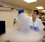 Julie Feinstein, Manager of the American Museum of Natural History Ambrose Monell Collection, works over a liquid nitrogen-cooled storage vat at the museum Tuesday in New York in this photo released by the museum.