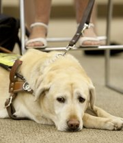 Nick Krug/Journal-World Photo.Mochizuki's guide dog Comet waits patiently as her master gets a makeover, Thursday, July 23, 2009 at Weavers, 9th and Massachusetts streets.