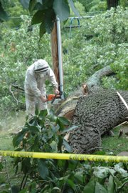 Tony Schwager, of the family-owned Anthony's Beehive company between Baldwin City and Lawrence, helps remove a beehive from a fallen tree limb Tuesday, Aug. 18, 2009.