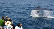 This photo provided by Capt. Dave's Dolphin & Whale Safari shows passengers taking photos of a submerging whale.