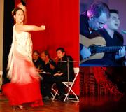 Flamenco Mio