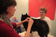 Shae Harrigan has a Schipperke that was diagnosed with cancer nearly a year ago, and after being referred to Dr. Cathy King, who uses alternative treatments including acupuncture and herbs, the dog has changed for the better.