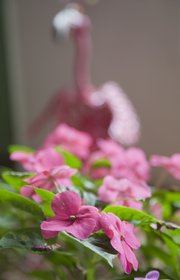 Bright pink impatiens add color to the garden at Babcock Place.