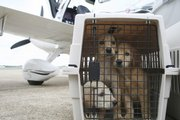 Crated puppies await a flight from Montgomery, Ala., to Tampa, Fla., Sept. 3. Pilots N Paws flew the dogs from a shelter to a rescue group, saving them from euthanasia.