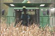 Area farmer Steve Tuttle harvests corn in a field in Wyandotte County, trying to finish before Thanksgiving Day. Tuttle says he enjoys farming and would like to see more young people to join the profession.