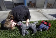 Pet First Aid and CPR instructor Denise Fleck demonstrates Wednesday how to perform CPR on a cat dummy at the Burbank Animal Shelther in Burbank, Calif. Fifty-eight percent of pet owners would be at least somewhat likely to perform CPR on their pet in the event of a medical emergency, according to an Associated Press-Petside.com poll.