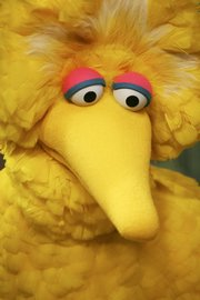 "Big Bird tapes an episode of ""Sesame Street"" in New York in this April 10, 2008, file photo. Big Bird, who has appeared on ""Sesame Street"" since the beginning, is turning 40 but remains a 6-year-old."