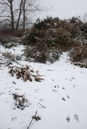 Fresh animal tracks in the snow lead into a pile of discarded Christmas trees that the city has recycled to create a wildlife habitat on land northwest of the city near the Kansas River levee. City trash crews picked up more than 2,300 Christmas trees during their curbside pickups after the holidays.
