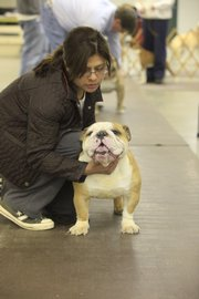 Gissella Osborn, of Greeley, and bulldog Darvis work one-on-one at the class, offered through the Lawrence Jayhawk Kennel Club.