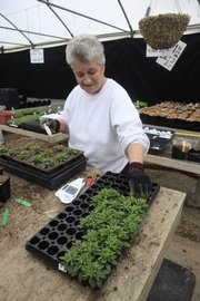 With spring just around the corner, greenhouses in Lawrence like Howard Pine's Garden Center, 1320 N. Third St., are putting out produce seeds and plantings for gardeners.
