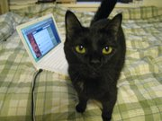 Koshka is frequently featured in tweets by her owner, Kansas University student Synthia Somerhalder, at @Isaidtomycat.