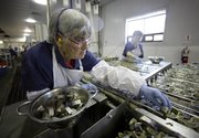 Lela Anderson fills cans with sardine steaks April 8 at Stinson sardine cannery in Gouldsboro, Maine. Anderson has worked at the cannery for 54 years. The cannery, the last of its kind in the U.S., will shut down this week.