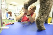Groomer Sue Lown works on Phoebe's paws. Phoebe's owners bring her in every four weeks to keep shedding under control.