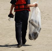 A Coast Guard member carries off a dead, oil-covered pelican that was found Thursday on North Breton Island, La.