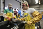 Natalie Floyd, right, and Alyssa Auer rinse off a brown pelican after it was washed Friday at the Fort Jackson Bird Rehabilitation Center in Buras, La. The bird was rescued after being covered in oil from the Deepwater Horizon oil spill.