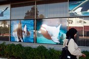 A Moroccan woman passes by posters outside the venue for the International Whaling Commission meeting, which begins today in Agadir, Morocco.