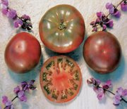 Purple Cherokee tomatoes