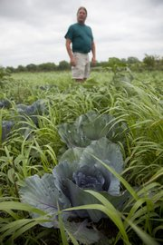 Kevin Irick looks over a crop of cabbage. Irick has become a first-generation farmer, working land near Linwood and growing a variety of vegetables, flowers and fruits.