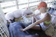 Taylor Stanley,16, of the Vinland Valley 4-H club, sprays her hog with some cool water as temperatures hit 101 at the Douglas County Fair.