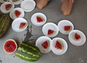 Slices of watermelon wait for the next round of competition Saturday at the watermelon seed spitting contest at the Vinland Fair.