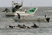 Fishermen drive bottle-nose dolphins into a net during their annual hunt Thursday off Taiji, Wakayama Prefecture, Japan. The Japanese government allows a hunt of about 20,000 dolphins a year, and argues that killing them, and also whales, is no different from raising cows or pigs for slaughter.