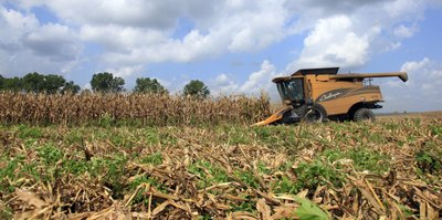 Corn_crop_002.JPG