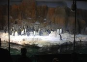The penguin exhibit at the Henry Doorly Zoo's Scott Aquarium.