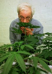 Denis Peron, founder of the Cannabis Cultivators Club, smells a northern lights marijuana plant in the club's growing room in San Francisco in this Jan. 14, 1997, file photo. Some medical marijuana supporters, including Peron, have said Proposition 19, the ballot measure to legalize pot, could undermine the credibility of the drug as a medical treatment.