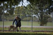 "Certified trainer Jeanette Wisdom works with ""Smudge,"" a one-year-old greyhound mix that she refers as a ""settled dog"" at the Lawrence Humane Society.."