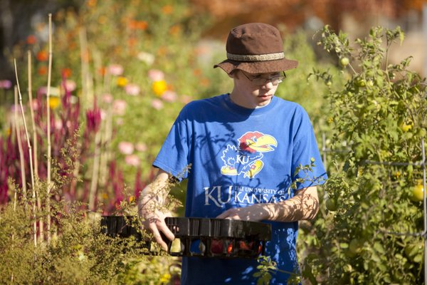 "West Junior High School ninth-grader Colin Dietz searches for tomatoes in the garden Sunday, Oct. 17, 2010. Dietz has been a full-time volunteer for the ""Growing Food, Growing West"" project."