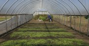 Noah Wood, Lawrence, works up some ground for salad mix beds in a high tunnel at Wakarusa Valley Farms. The large, unheated greenhouses allow farmers to protect their plants from the elements by covering the area with plastic that's attached to metal stakes and arches.
