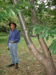 Charlie NovoGradac, of Lawrence, talks about the process of grafting his chestnut trees and shows a visible example during a class at his orchard. Grafting is when a tree with an established root system is cut back and branches from another tree are attached to the old tree with wax. This process allows the new tree to grow more quickly using the old tree's root systems.