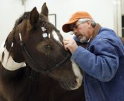 Jay Miller, Tonganoxie, inspects Levi's eyes a day after the horse's surgery at Kansas State University's Veterinary Hospital in this Nov. 17 photo. Miller rescued Levi and has been training him for an Extreme Mustang Makeover show.