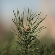 Chopping down a fresh Christmas tree can make the most environmental sense.