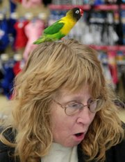 Ellen Ross, Topeka, completes paperwork to adopt a friendly parrot that found a comfortable spot on Ross' head to do some grooming. Beak n Wings Inc. brought several types of rescued parrots to Petco in Lawrence on Saturday for an adoption event.