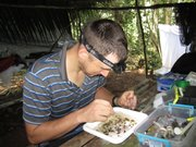 KU assistant professor Andrew Short sifts through water beetle specimens he collected in Suriname.