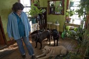 Mica Willis, Baldwin City, uses her large collection of tropical plants to brighten the dreary winter months before planting them back outside in time for spring and summer.  Here, her three dogs Sugar Bear, Hermione and Lucy  enjoy the warmth of the sunroom where many of the plants are kept in the winter months.