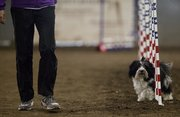 Vicki, a two-year-old Havanese, walks through the weave section as her owner Karolyn Harrison, Manhattan, follows on the side at the dog agility trials Thursday at the Douglas County fairgrounds.