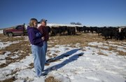 Mark and Brenna Wulfkuhle check on several pregnant beef cows on their farm, Rocking H Ranch, in Berryton.