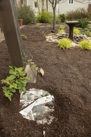 Deb Yager uses old newspapers along with cotton burr mulch to help keep the weed growth down. Recycling newspaper as a mulch is a great way to kill off grass in new garden areas and suppress weeds.