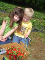 Lizzy and Jack Carr, ages 5 and 3, pick strawberries last summer at Wohletz Farm Fresh. It was the first year for the Woheltz family's pick-your-own operation.