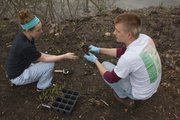 Nicole Nahrstedt, left, works with her brother Matt Nahrstedt, a senior architecture student, to plant some of the new grass plugs.